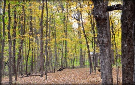 Autumn Wind Chimes